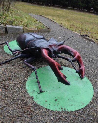 świat owadów (1)